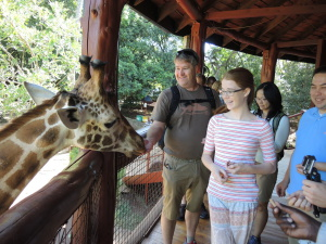 Feeding the Rothchildee's giraffe....a close acquaintanceship.