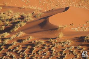 Oryx-Dune